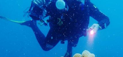 Głęboko zaawansowane latarki dla nurków