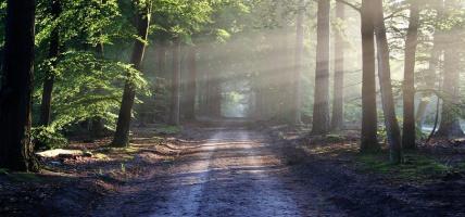 Jak nie zgubić się w lesie? Poradnik
